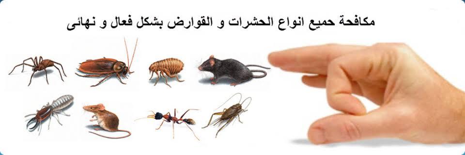 شركة مكافحة النمل الأبيض